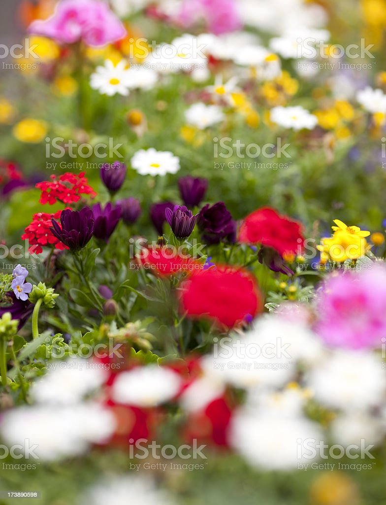 bunch of different flowers royalty-free stock photo
