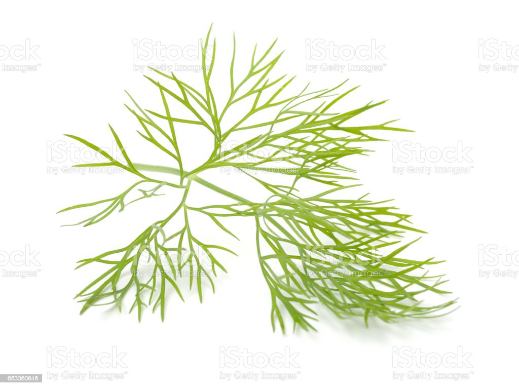 Bunch of dill on white background stock photo