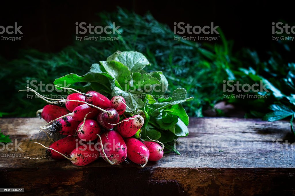 Bunch of dirty radishes with leaves stock photo