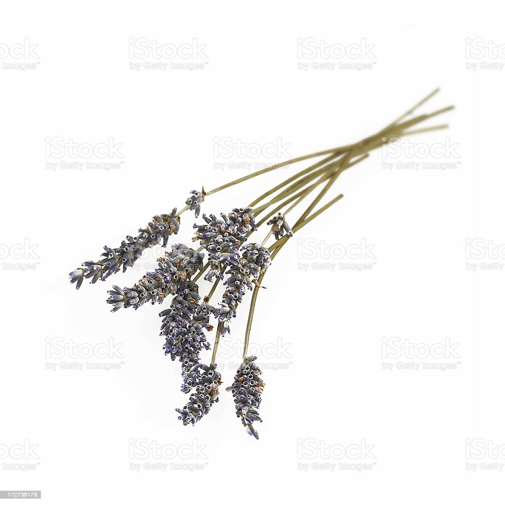 Bunch of dried lavender royalty-free stock photo