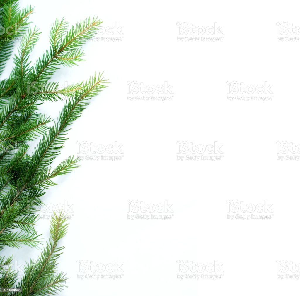 A bunch of fir branches on a white background royalty-free stock photo