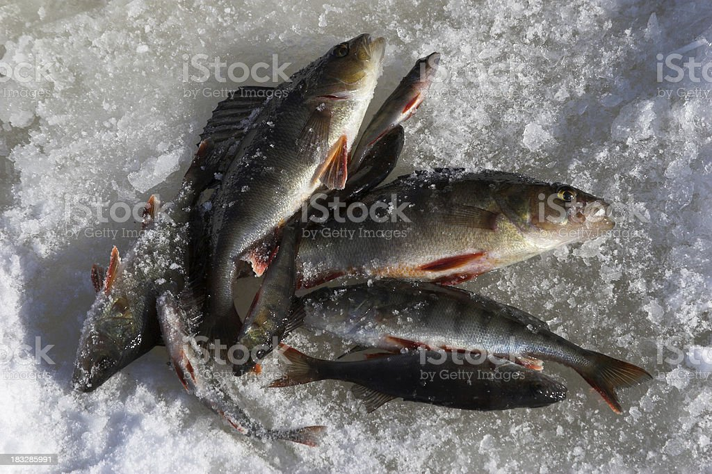 Bunch of fishes royalty-free stock photo