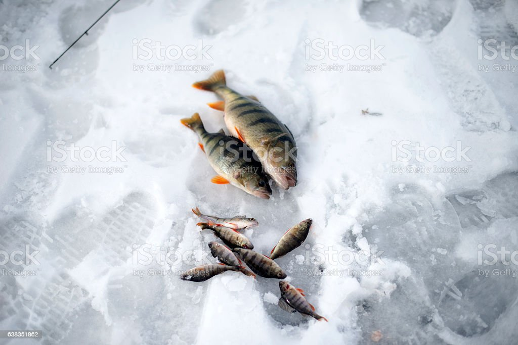Bunch of fishes stock photo