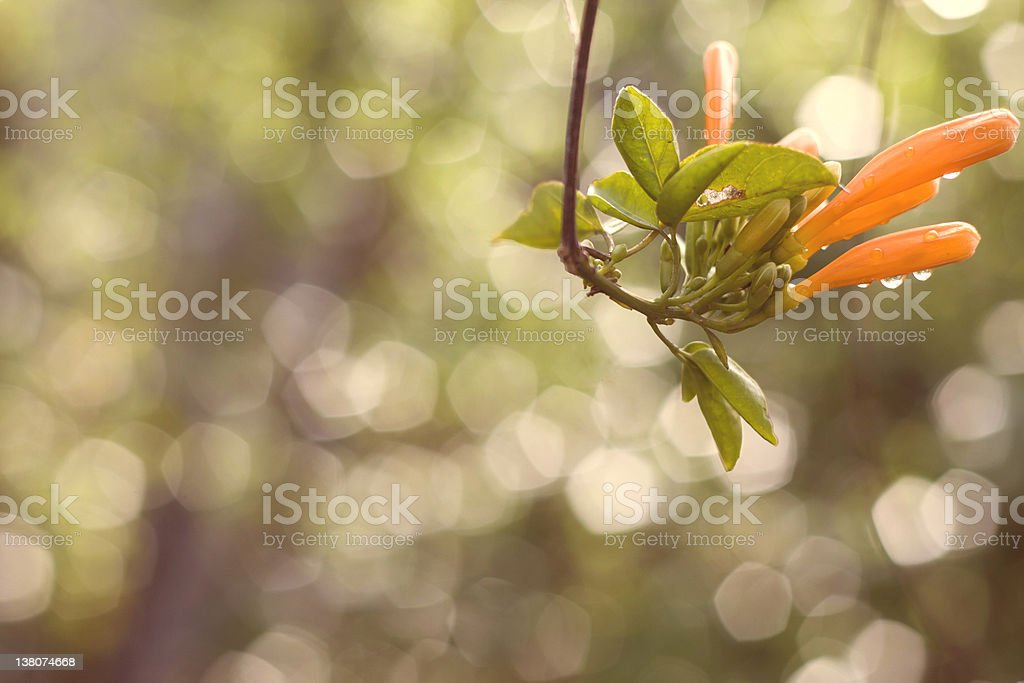 Bunch of flowers against a creamy background after rainfall royalty-free stock photo
