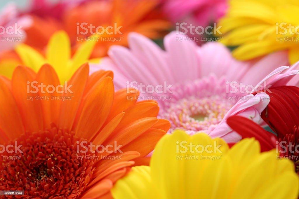 Bunch of flowers Lizenzfreies stock-foto