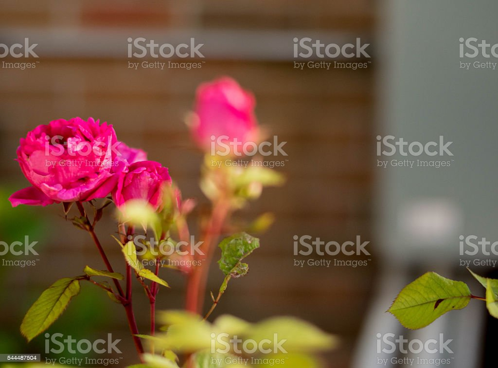 Bunch of flowers with blurred background wall stock photo