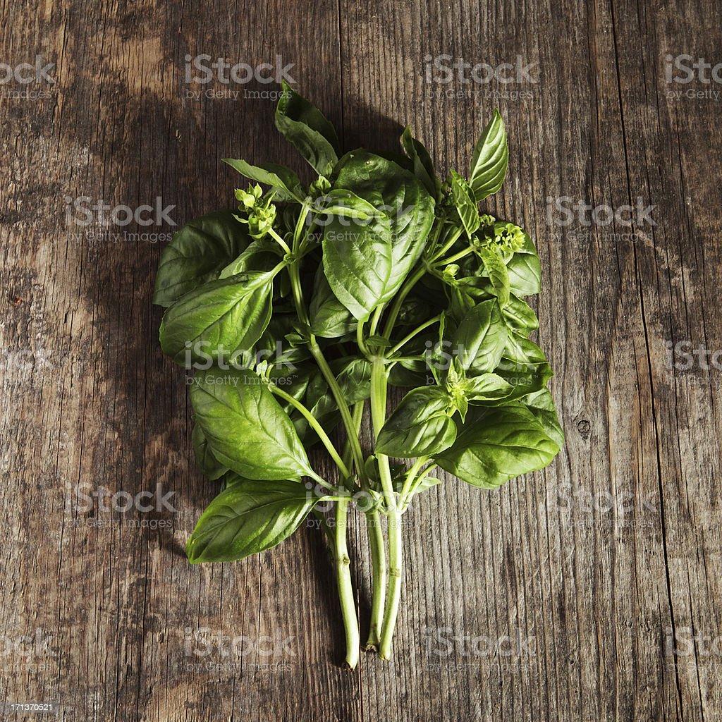 Bunch of fresh basil stock photo