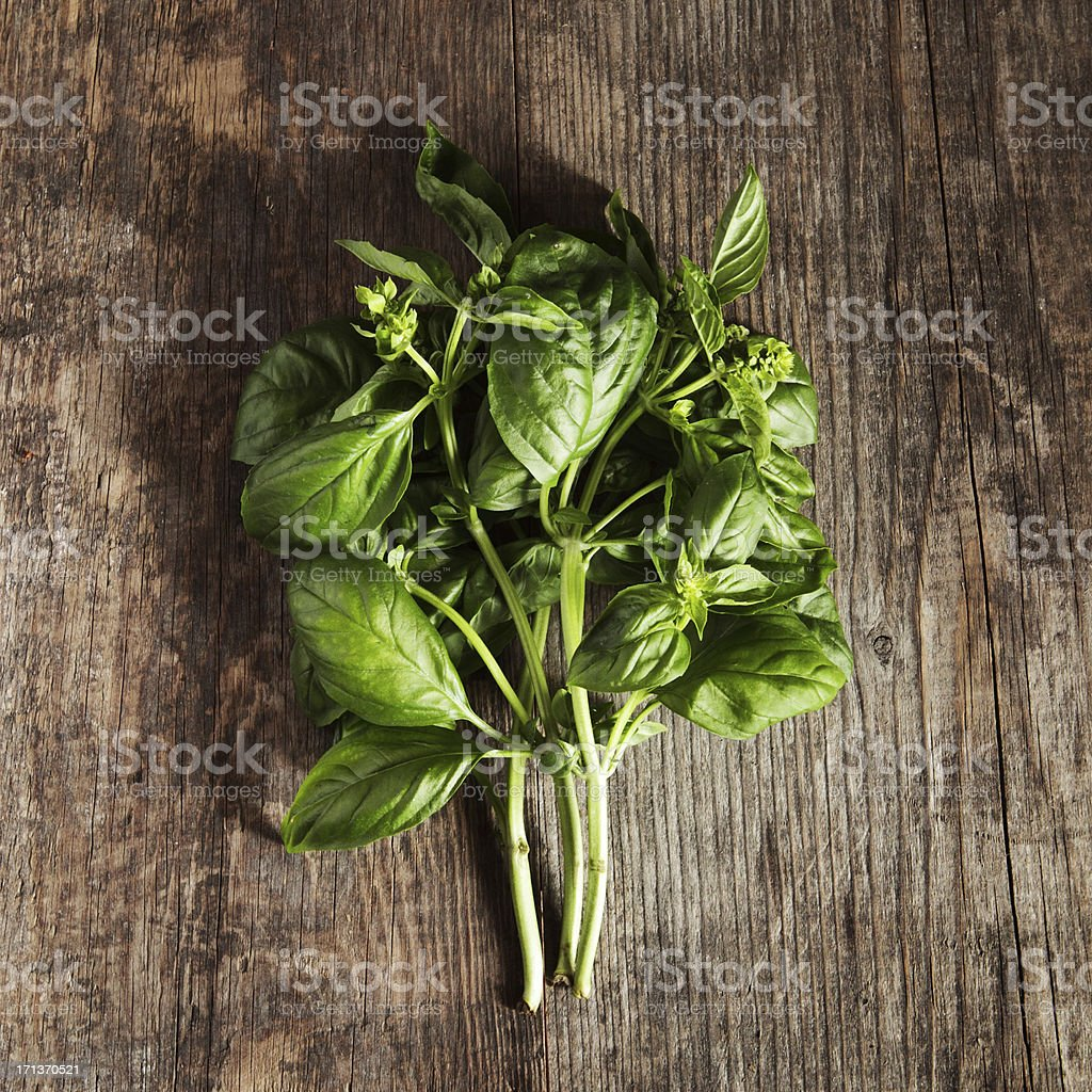 Bunch of fresh basil stock photo