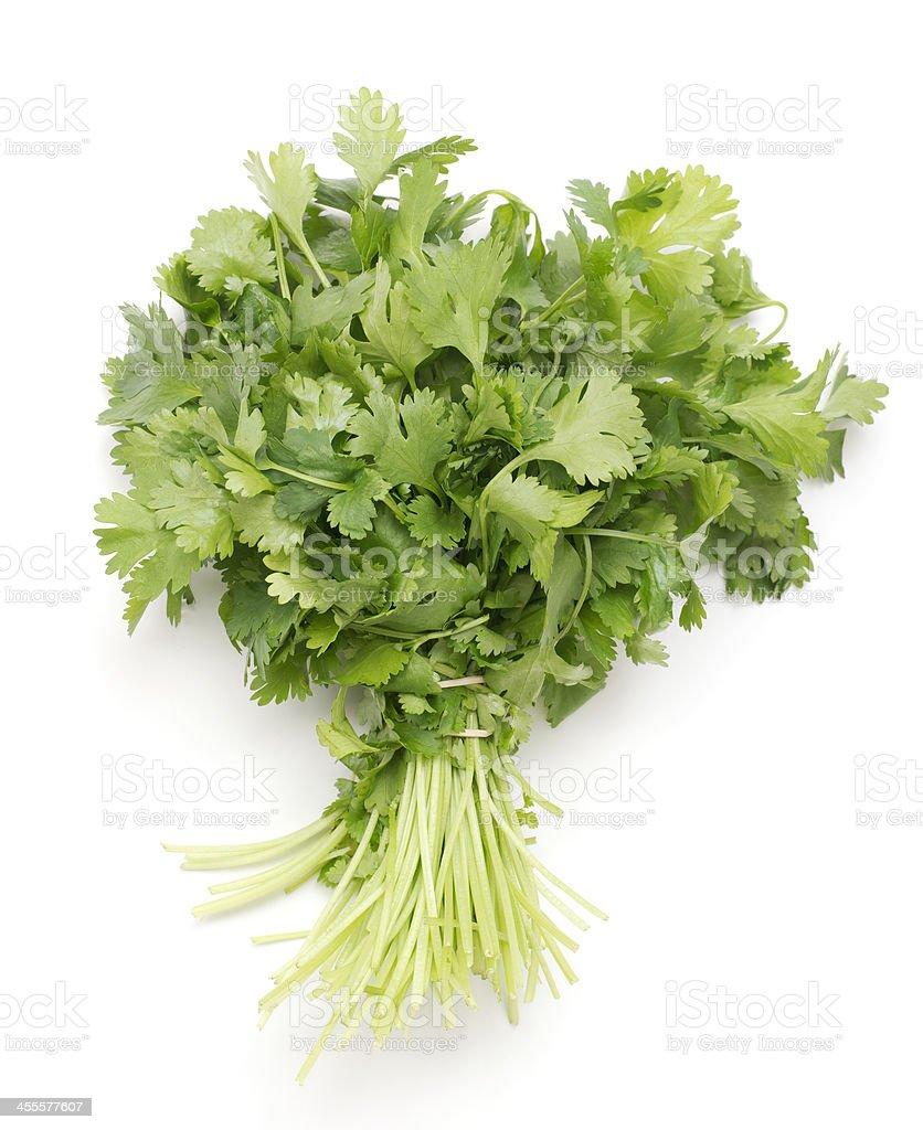 bunch of fresh cilantro stock photo