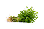 Bunch of fresh coriander leaves over white background.