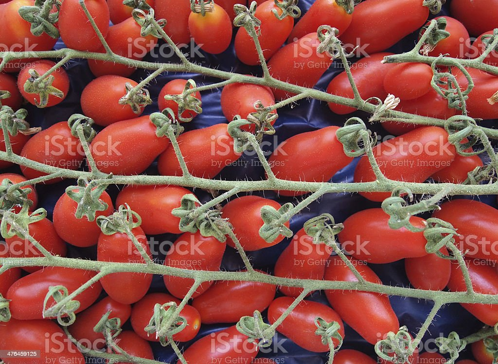 Bunch of fresh Italian tomatoes royalty-free stock photo