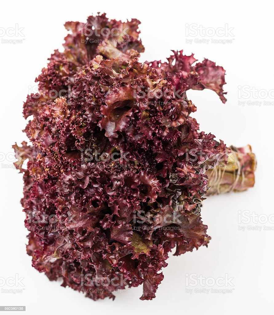 bunch of fresh leaf lettuce lollo rosso on white stock photo