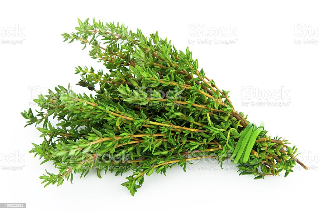 Bunch of fresh picked thyme on white background stock photo