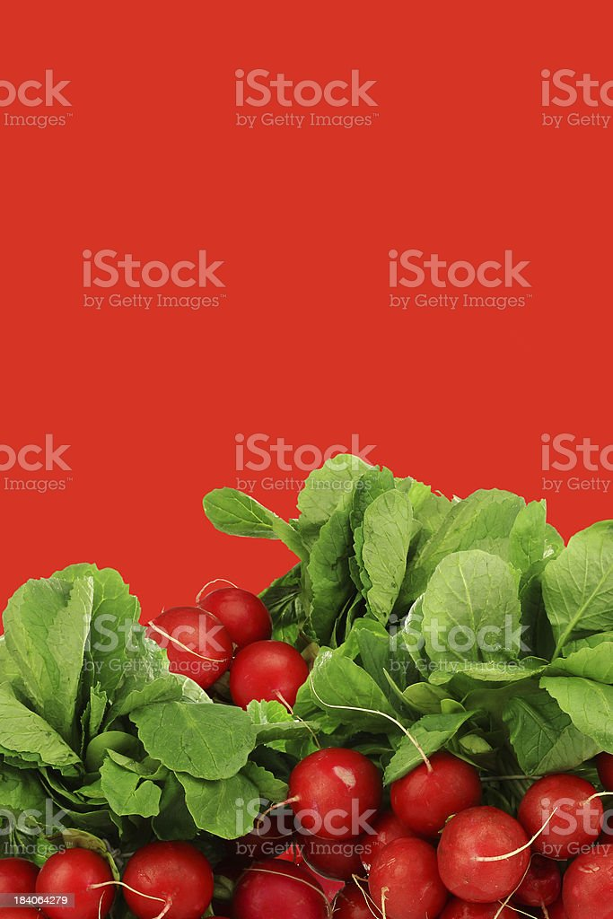 bunch of fresh radishes royalty-free stock photo