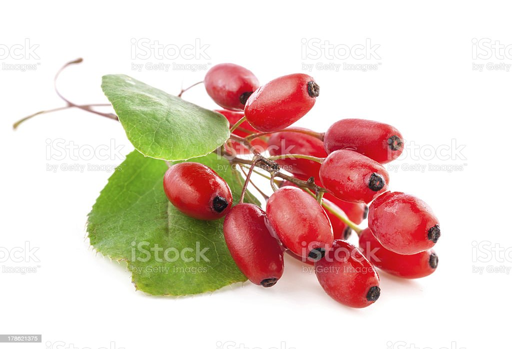 Bunch of freshly picked barberries stock photo