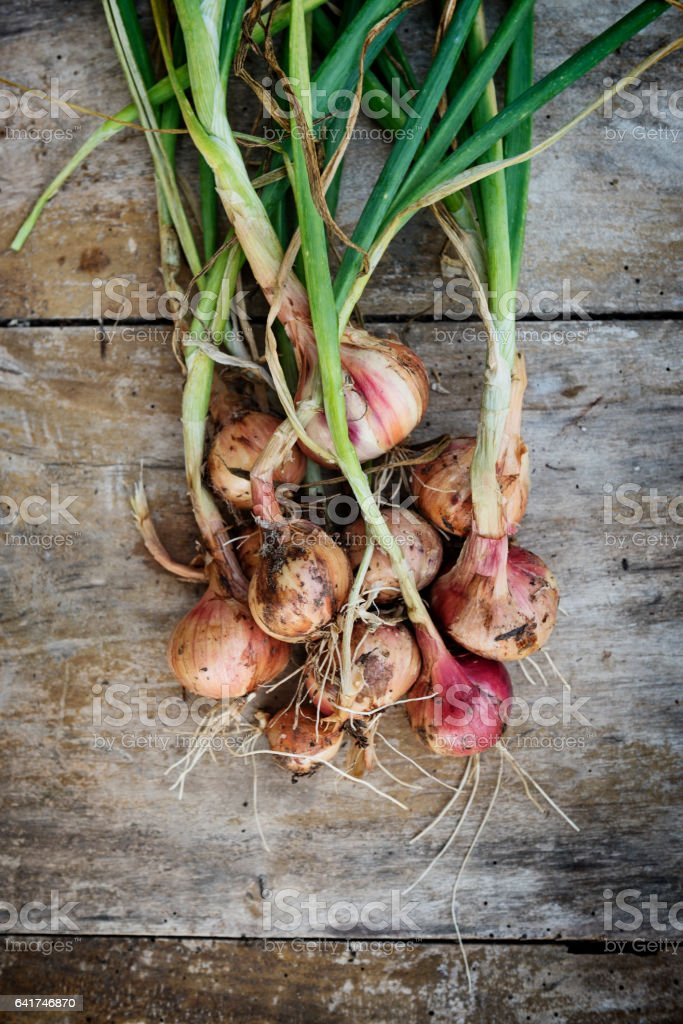 Bunch of Freshly Picked Organic Shallots Overhead View. stock photo