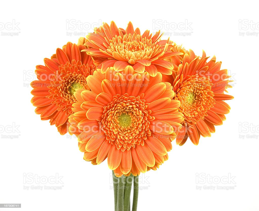 Bunch of Gerberas royalty-free stock photo
