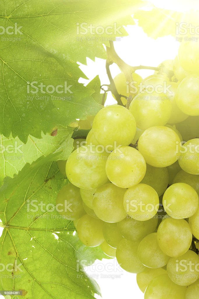 Bunch of grapes. royalty-free stock photo