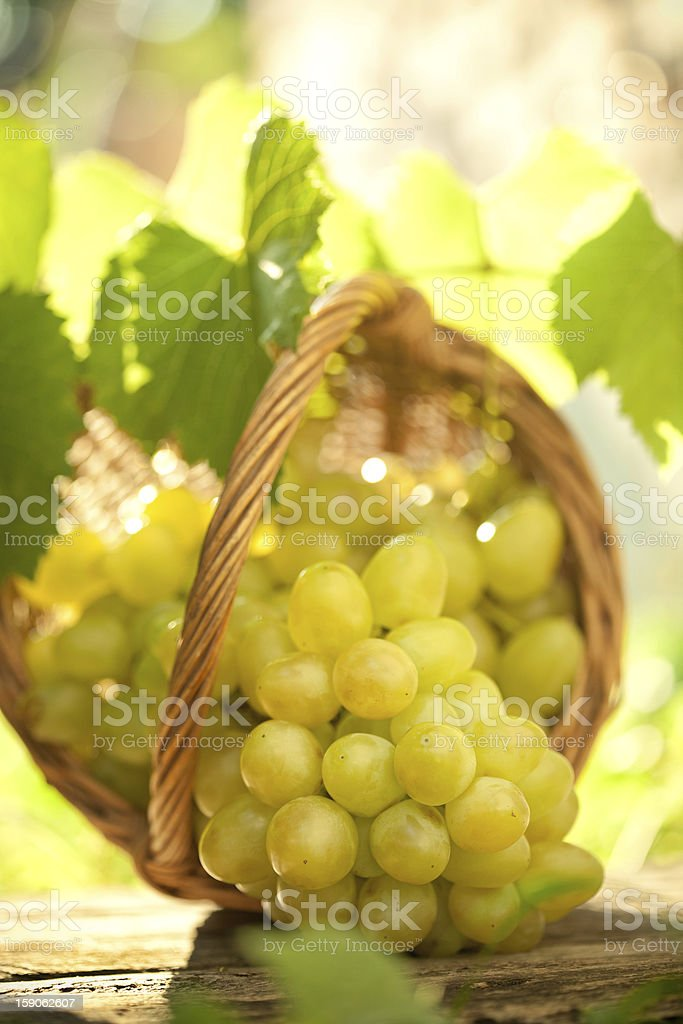 Bunch of grapes with vine leaves in basket royalty-free stock photo