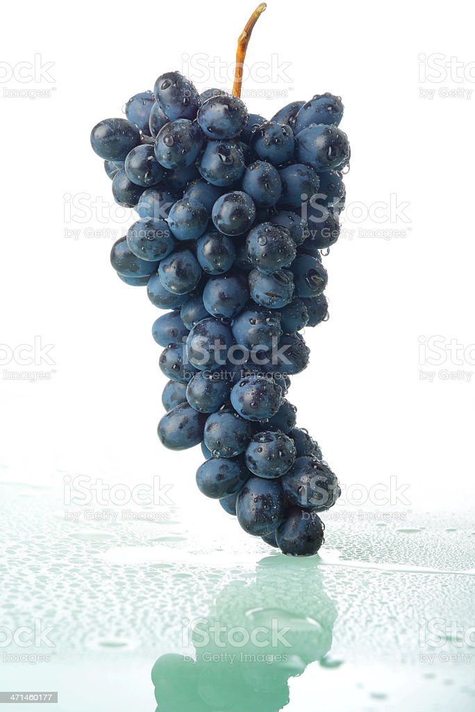 Bunch of grapes with water drops royalty-free stock photo