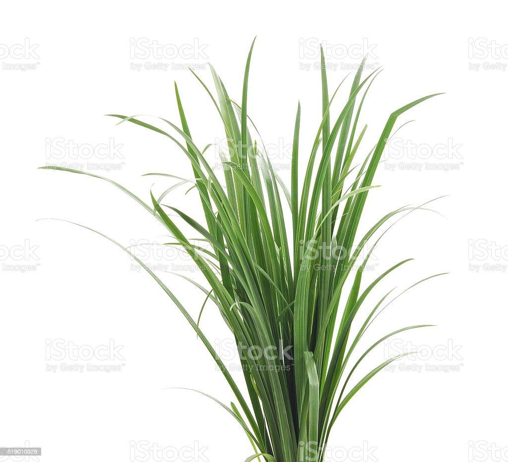 Bunch of green grass. stock photo