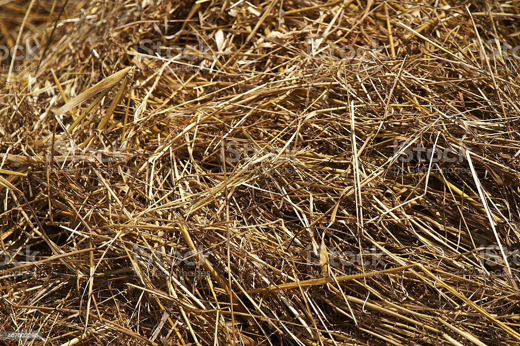 Bunch of Hay royalty-free stock photo
