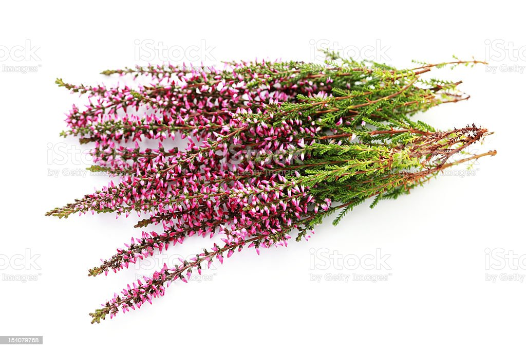 bunch of heather royalty-free stock photo