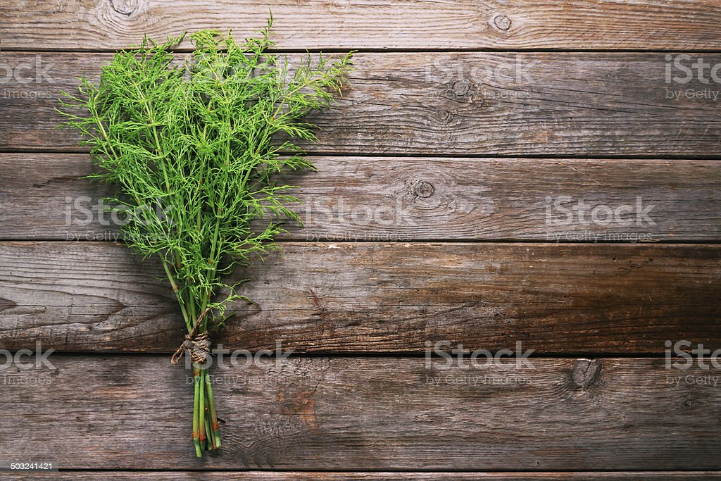 Bunch of herb equisetum arvense stock photo