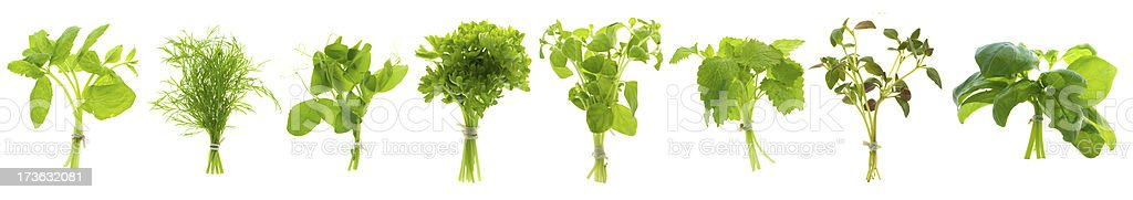 Bunch of herbs in a row stock photo