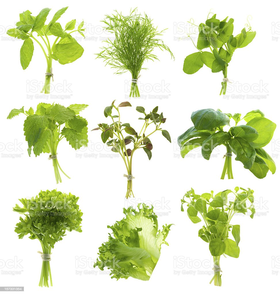 Bunch of herbs (XXL) royalty-free stock photo