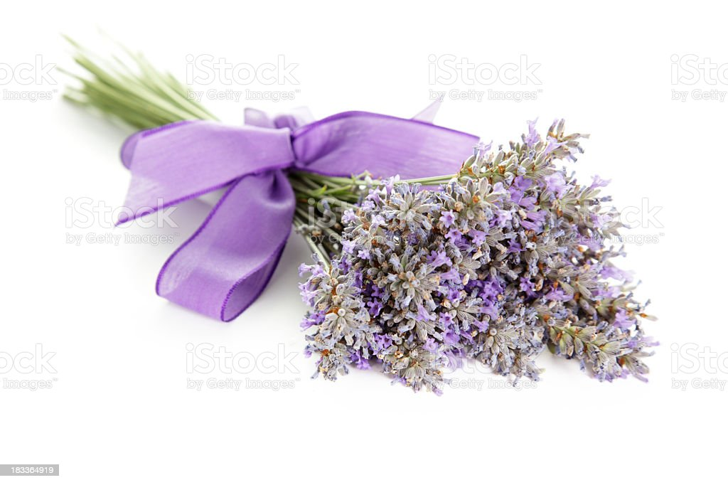 Bunch of lavender tied up with a purple ribbon stock photo