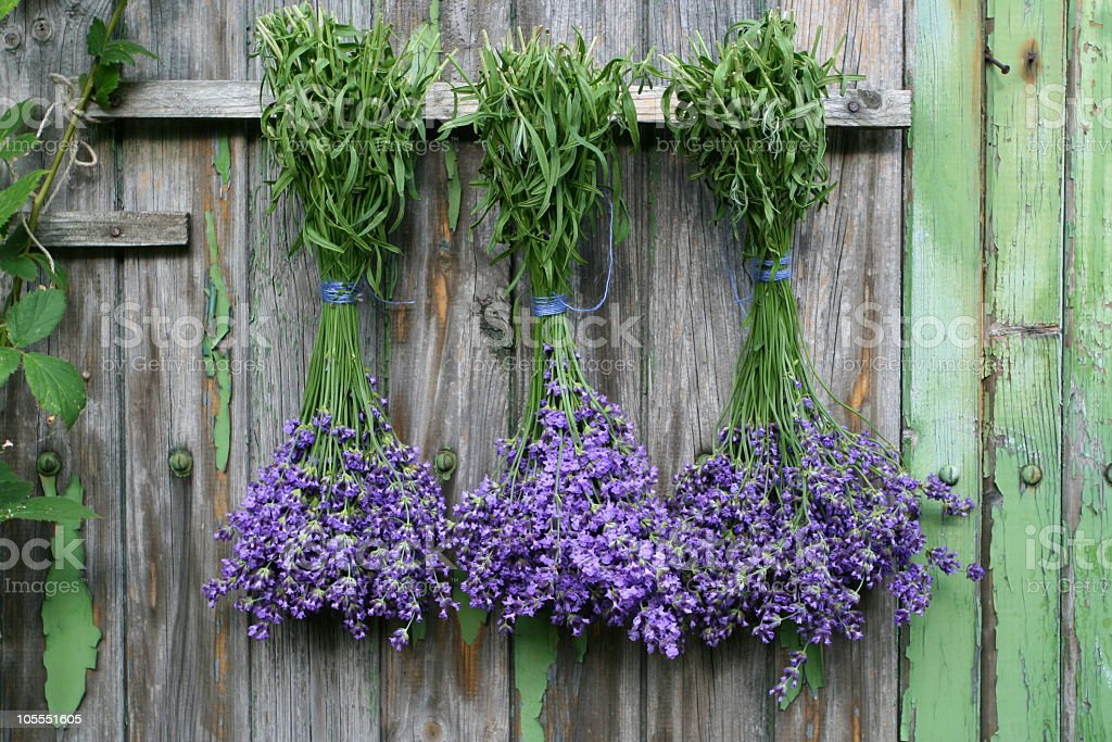 A bunch of lavenders hanging on a wooden wall stock photo