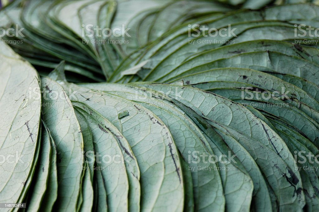 bunch of leaves royalty-free stock photo
