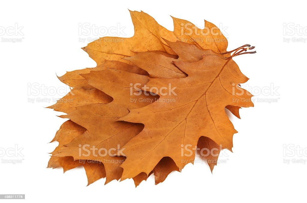 bunch of leaves stock photo