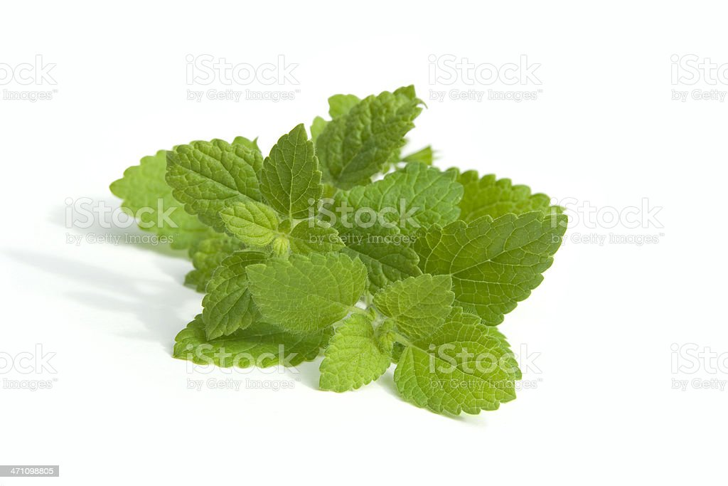 Bunch of lemon balm leaves on white background  royalty-free stock photo