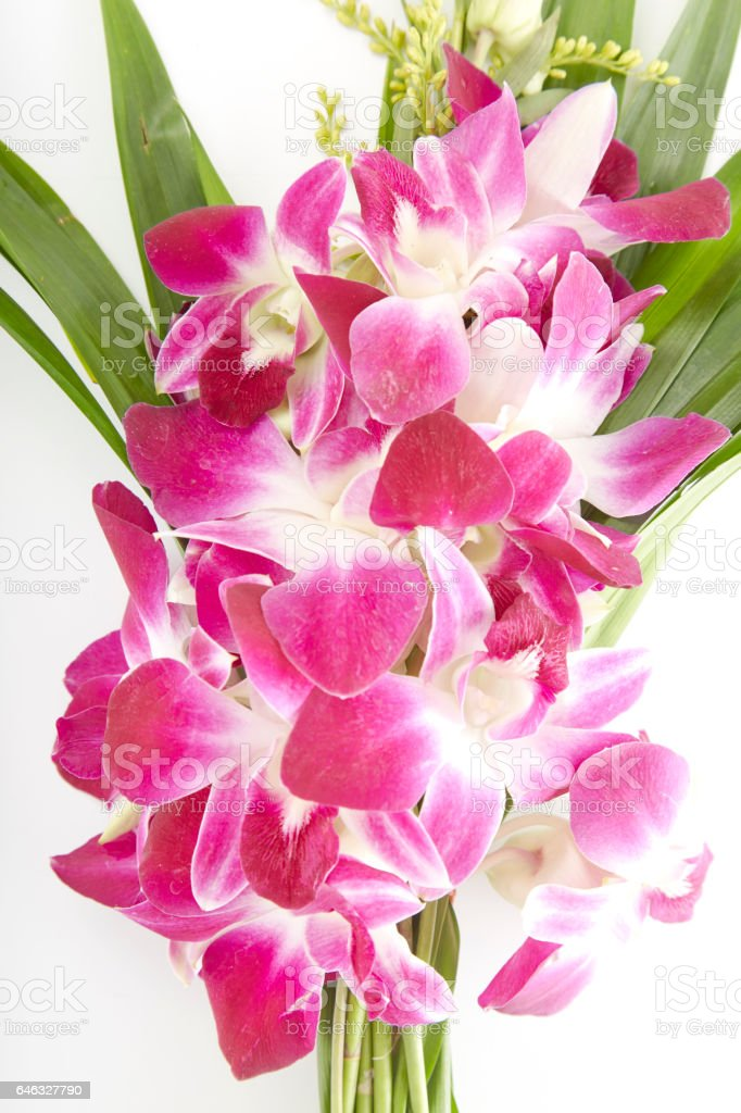 Bunch of local thai orchid flowers with pandan leaves stock photo