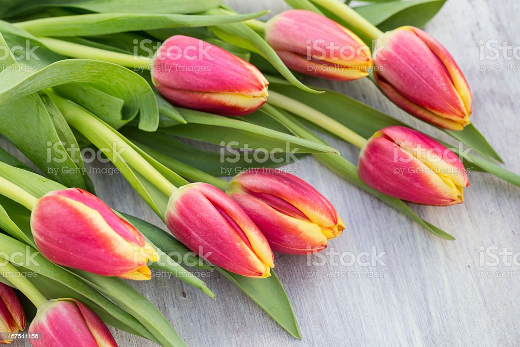 Bunch of Many Spring Tulip Flowers on Table stock photo