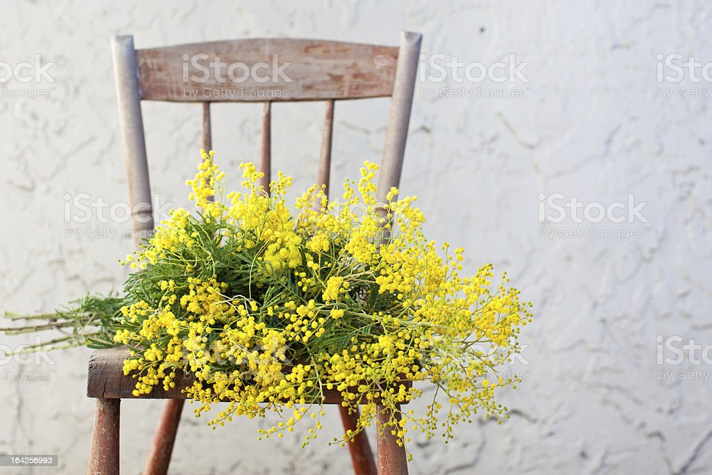 Bunch of mimosa flowers on wooden rustic chair stock photo