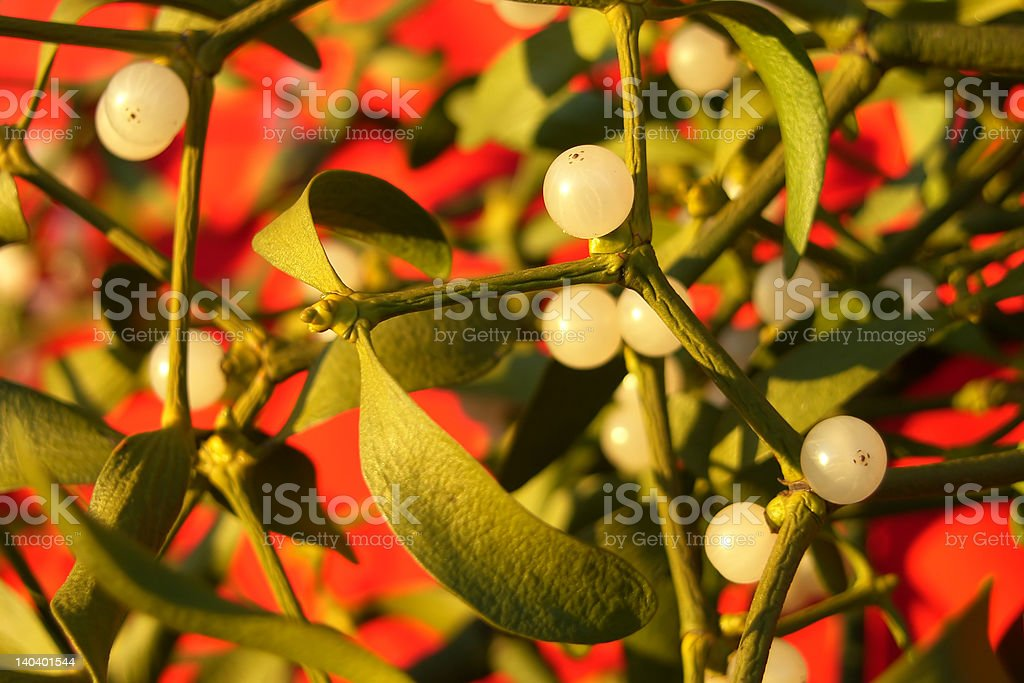 bunch of mistletoe royalty-free stock photo