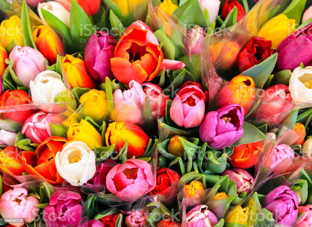 Bunch of multicolored Tulips stock photo