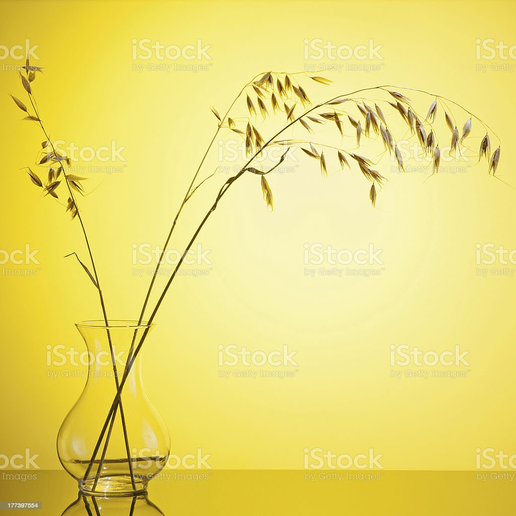 Bunch of oats ear wheat in vase royalty-free stock photo