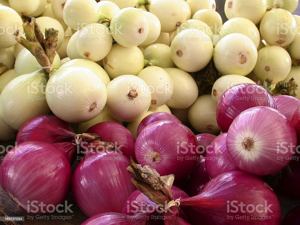 Bunch of Onions royalty-free stock photo