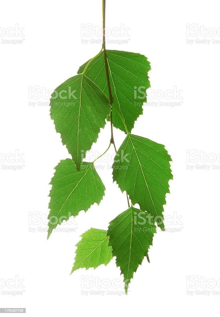 Bunch of organic leaves on a white background stock photo