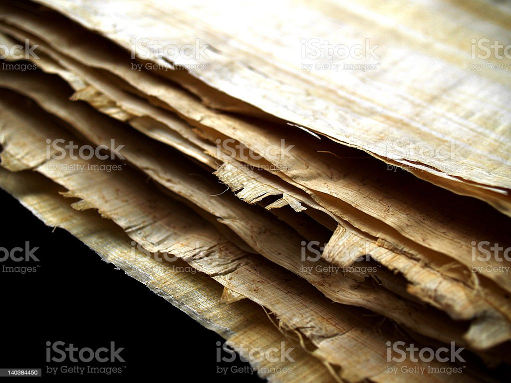 bunch of papyrus stock photo
