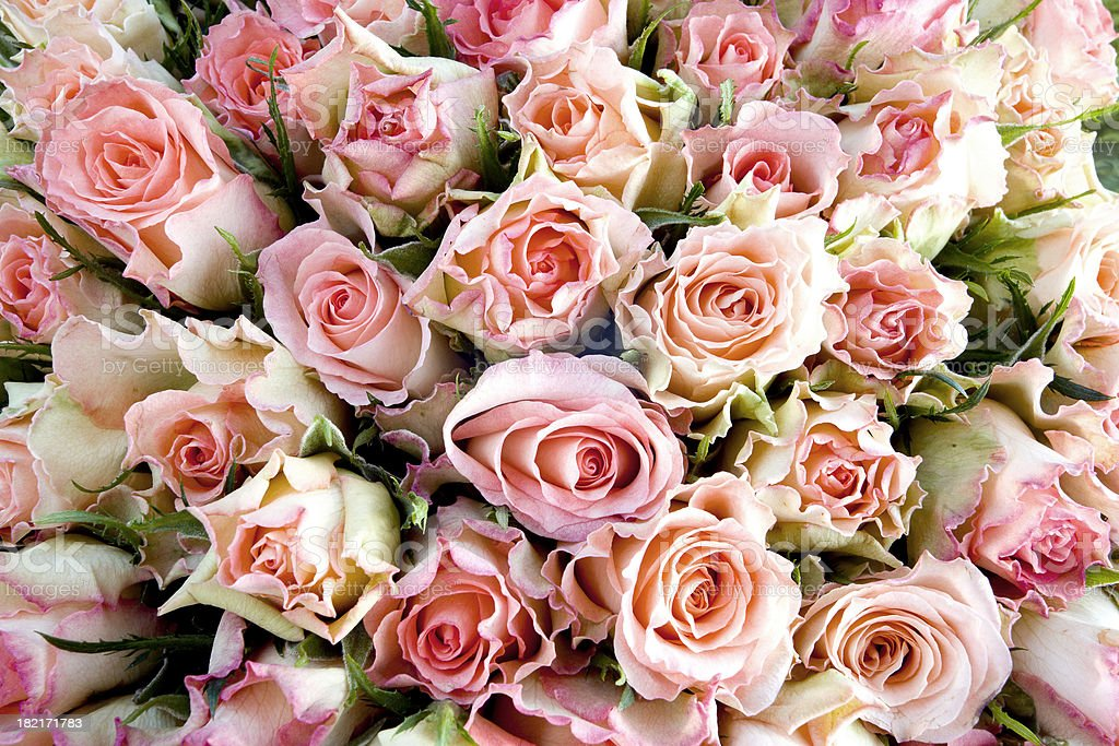 A bunch of pink and white roses stock photo