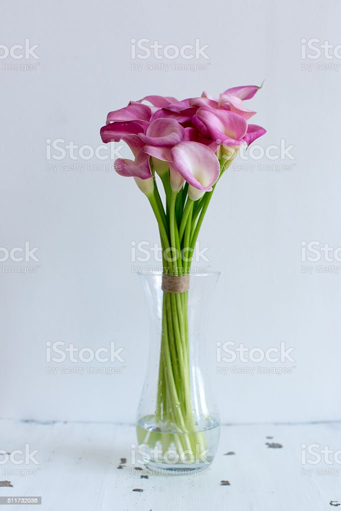 Bunch of pink callas in the vase stock photo
