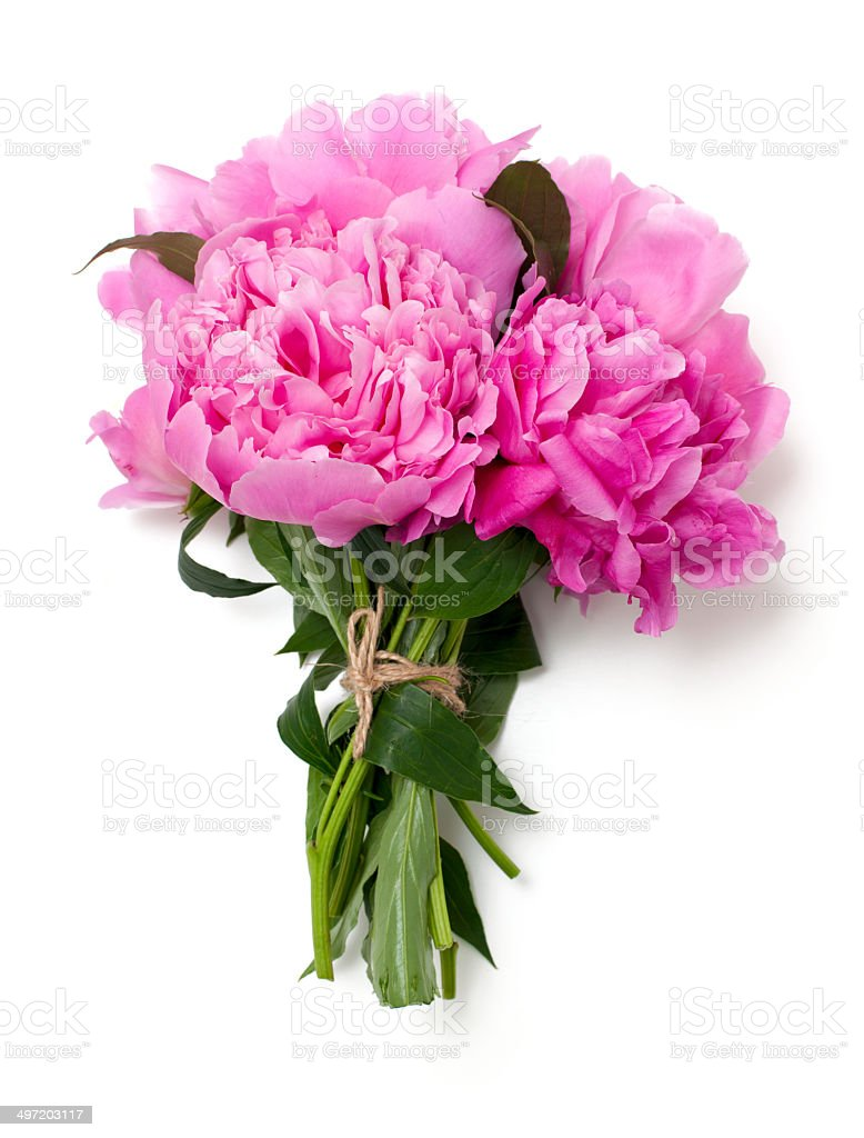 bunch of pink peonies isolated on white background stock photo