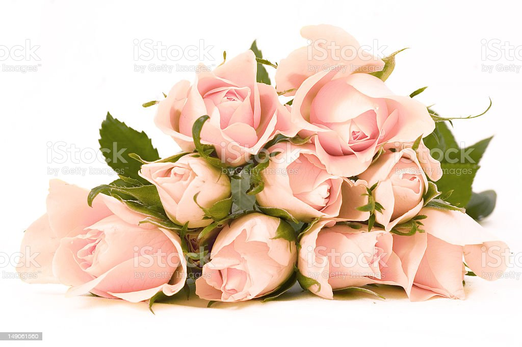 Bunch of pink roses on white background royalty-free stock photo