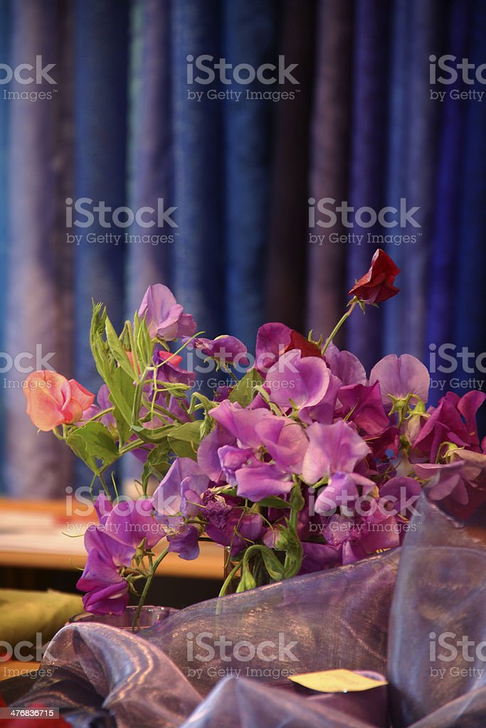 bunch of pink vetches between purple and blue cloths royalty-free stock photo