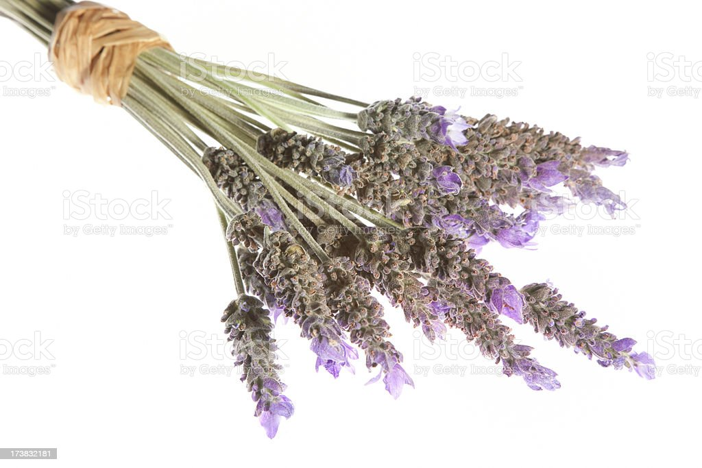 Bunch of Provence or French Lavender, Bouquet, Arrangement Purple Flowers stock photo